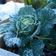 Frozen plants with rain LWP