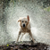 Cool Wet Dog at rain HD LWP