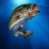 AR Fishing