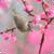 Beautiful Spring Live Wallpaper HD