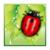 Beetle Game Dash