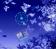 @Blue Butterflies@