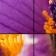 Blumen Puzzle