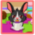 Cute Bunny Care