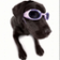 Doggy in Sunglasses Live Wallpapers