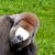 Funny Animal Photo Montage