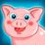 Funny Pig Feeding