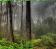 Green Forest Fog