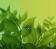 Green Life 1
