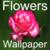 HD Flowers Wallpapers