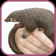Save Pangolin: Play with the pangolins