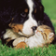 Funny Cats And Dogs Jigsaw Puzzle