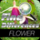 Find Differences - Flower