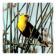 Blackbirds - Live Wallpaper