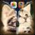Kitten Zipper Lock Screen HD