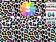 leopardo arcoiris