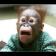 MonkeyLadder
