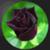 Most Beautiful Black Roses