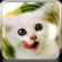 Mr. Puzzle Cat