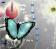 My Blue Butterflies