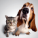 Pet and Animal Tips