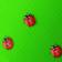 Spring Ladybird Live Wallpapers