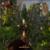 The Witcher 3 Wild Hunt Walkthrough