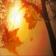Fall Autumn Glow