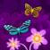 Colorflies - 5639