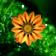 Flowers - 5622