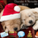 Christmas Puppies Theme For Blackberry