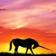 Last Unicorn - 5586