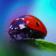 Ladybug - 5585