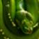Beautiful Snake Theme by Vimukti Technologies