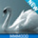 Swan Lake - Enhanced with SVG - Media - Shortcuts