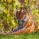 Wild Animals for 9650 9700 OS 6