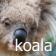 daZOO Koala Theme