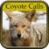 Coyote Hunting Calls