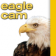 Eagle Cam - WVEC.com Norfolk