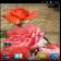 Rose2 live wallpaper