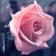 flowerlw