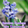 Flowers4livewallpaper
