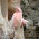 Parrot Colour