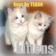 Kittens (Keys) for Blackberry