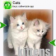 Kittens (Keys) for webkit