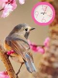 Sweet Bird FlasH