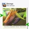 30 Shrimps (Keys)
