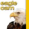 Eagle Cam - WVEC.com Norfolk