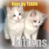 Kittens (Keys) for Blackberry